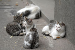Pride of stray cats Stock Images