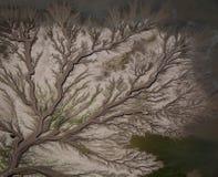 Priel-Muster nahe dem alten Fluss, Kimberley Region, West-Australien Lizenzfreie Stockfotos
