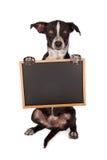 Prier mélangé noir et blanc de chien de race Photos libres de droits