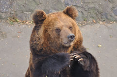 Prier pour la nourriture dans le zoo photos stock