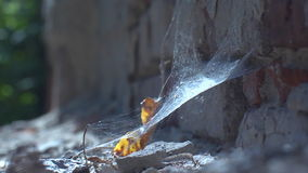 Priest, pitfall, spider, insect. An old spider web is a symbol of magic of antiquity and riddles of the past stock video