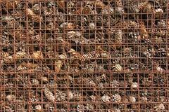 Prigione ed imprigionamento dei coni dietro le barre Fondo del pino Immagini Stock Libere da Diritti