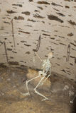 Prigione sotterranea medievale Fotografie Stock Libere da Diritti