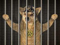 Prigioniero del cane in prigione immagini stock