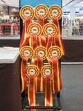 Prijs van 1st TICA Thailand Cat Show Stock Afbeelding