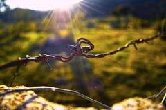 Prikkeldraad door zonstralen die wordt omringd Royalty-vrije Stock Foto