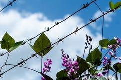 Prikkeldraad met bloemen en bladeren tegen een blauwe hemel met whit Stock Afbeelding