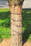 Prikkeldraad rond een boomboomstam die wordt verpakt Stock Fotografie