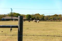 Prikkeldraad, staal postomheining met roestige carabiner, koeien en stieren op de achtergrond Stock Foto