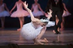 Prima ballerina white swan Royalty Free Stock Image