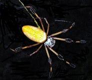 Prima colazione aspettante del ragno di mattina - Fotografia Stock Libera da Diritti