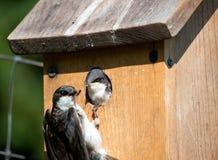Prima colazione del Birdhouse fotografia stock libera da diritti