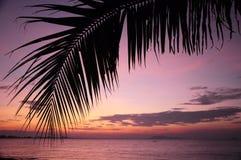 Prima della spiaggia di alba Immagine Stock