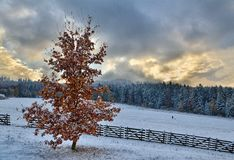 Prima della tempesta della neve Immagine Stock