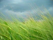 Prima di una tempesta Fotografie Stock