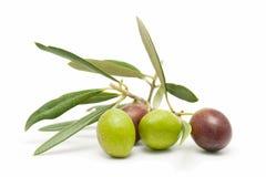 Prima linea delle olive fresche Fotografia Stock Libera da Diritti