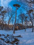 Prima luce nel legno Fotografie Stock