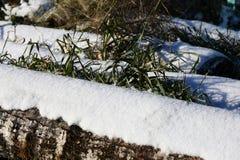 Prima neve immagini stock libere da diritti