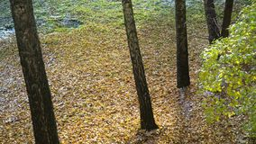 Prima neve che cade sulle foglie di giallo e sull'erba verde video d archivio
