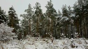 Prima neve della stagione Immagini Stock