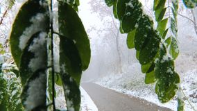 Prima neve di autunno video d archivio