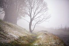 Prima neve di autunno sulla strada nebbiosa della montagna Fotografia Stock