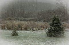 Prima neve di inverno Immagini Stock