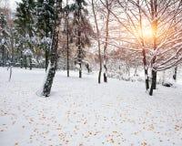 Prima neve negli alberi innevati della foresta nel legno Fotografia Stock