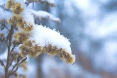 Prima neve nel 2018 fotografie stock