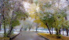 Prima neve nel parco di autunno, foto molle Fotografie Stock