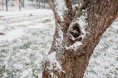 Prima neve nella città vie coperte Paesaggio urbano di autunno foglie verdi in Fotografia Stock Libera da Diritti