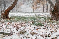 Prima neve nella città vie coperte Paesaggio urbano di autunno foglie verdi in Immagine Stock Libera da Diritti