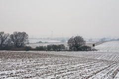 Prima neve sul campo di grano Immagini Stock