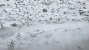 Prima neve sul prato verde stock footage