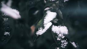 Prima neve sull'albero Fogli glassati Chiuda sul colpo stock footage