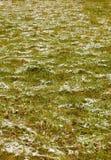 Prima neve sull'erba Immagini Stock Libere da Diritti