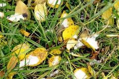 Prima neve sulle foglie di autunno e sull'erba verde Fotografie Stock Libere da Diritti
