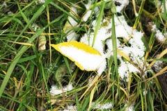 Prima neve sulle foglie di autunno e sull'erba verde Immagine Stock
