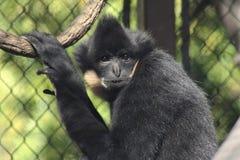 primaat stock afbeelding