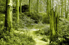 Primaeval forest Royalty Free Stock Photos