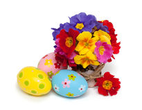 Primala flowers and easter eggs Royalty Free Stock Photography