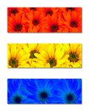Primary Colors Abstract Art Flowers. Abstract art of three strips of flowers with the primary colors of red yellow and blue Stock Photos