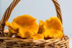 Primas amarelas frescas na cesta Fotografia de Stock Royalty Free