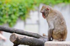 primat photos stock