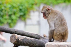 Primata Fotos de Stock