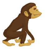 Primata na selva Imagem de Stock