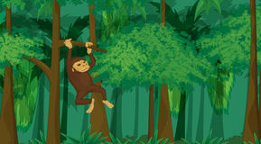 Primate in jungle. Detailed illustration of a monkey swinging in the jungle Stock Photos