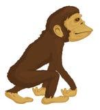 Primate in jungle Stock Image