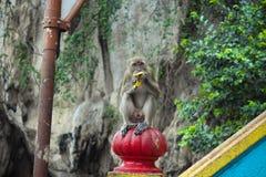Primate. Stock Image