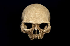 Primate skull isolate black background Royalty Free Stock Photography